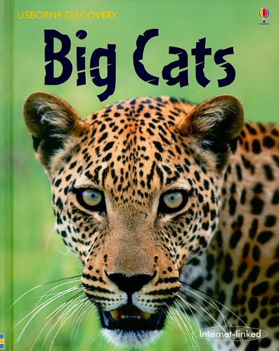 9780794522438: Big Cats (Usborne Discovery)