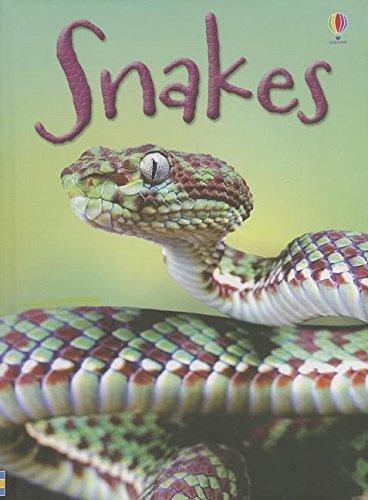 9780794526863: Snakes (Usborne Beginners)