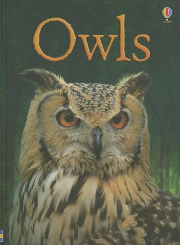 9780794534011: Owls (Usborne Beginners)