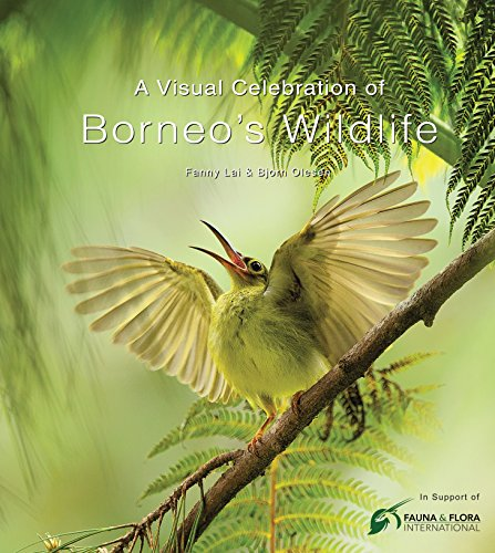 9780794607876: A Visual Celebration of Borneo's Wildlife: [All Royalties Donated to Fauna & Flora International] (Periplus Editions) [Idioma Inglés]
