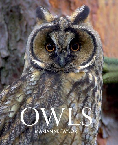 9780801451812: Owls