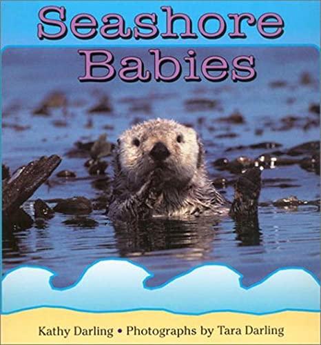9780802775344: Seashore Babies