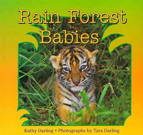 9780802784117: Rain Forest Babies