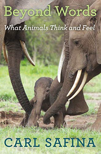 9780805098884: Beyond Words: What Animals Think and Feel