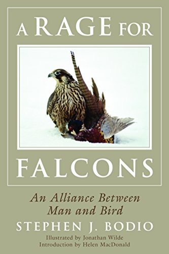A Rage for Falcons: Bodio, Stephen