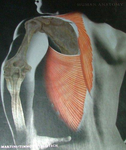 9780805372113 Human Anatomy 5th Edition Abebooks Frederic H