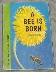 A Bee is Born