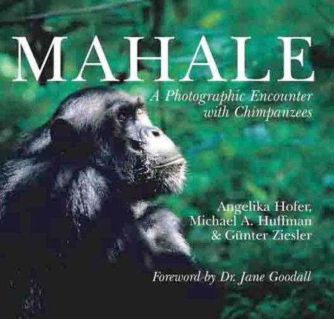 Mahale: A Photographic Encounter with Chimpanzees: Angelika Hoffer, Michael