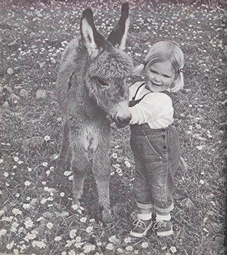 9780809021475: My Donkey Benjamin (A Terra Magica Children's Book)