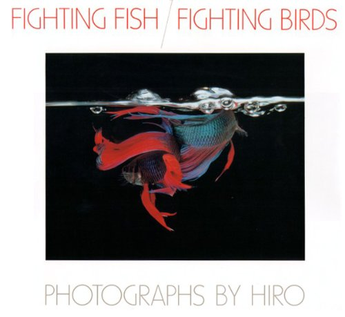 Fighting Fish / Fighting Bird: Hiro