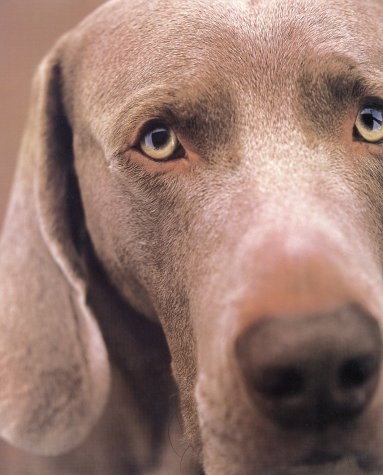 William Wegman Polaroids (0810934809) by William Wegman