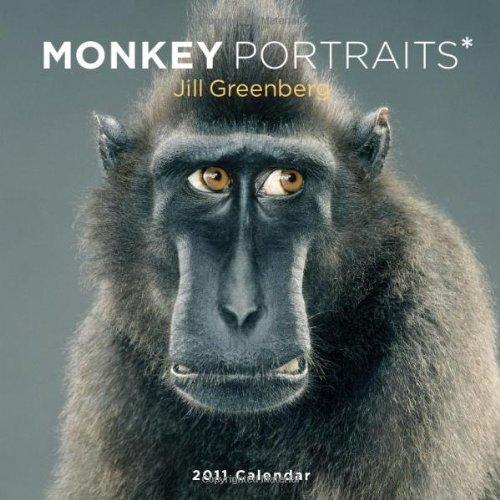 9780810989177: Monkey Portraits 2011 Wall Calendar