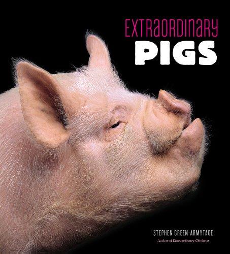 9780810997424: Extraordinary Pigs
