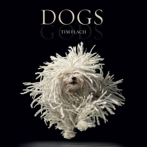 9780810997646: Dogs: by Tim Flach
