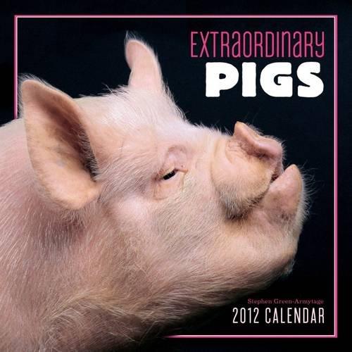 9780810998704: Extraordinary Pigs 2012 Wall Calendar