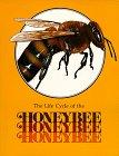 9780811481793: The Honeybee (Life Cycles Books)