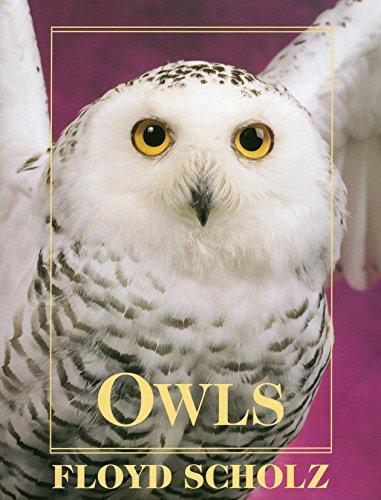 Owls (Hardback): Floyd Scholz