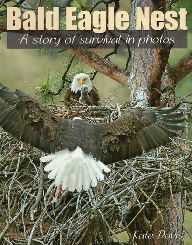 9780811711302: Bald Eagle Nest: A Story of Survival in Photos