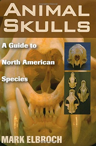 Animal Skulls A Guide to North American Species