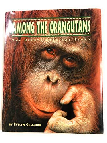 9780811800310: Among the Orangutans: The Birute Galdikas Story