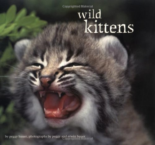 Wild Kittens (0811810127) by Bauer, Peggy