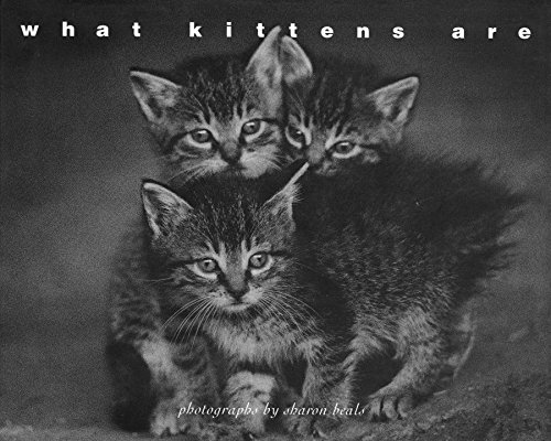 What Kittens Are