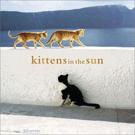 9780811839051: Kittens in the Sun