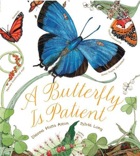 9780811864794: A Butterfly Is Patient