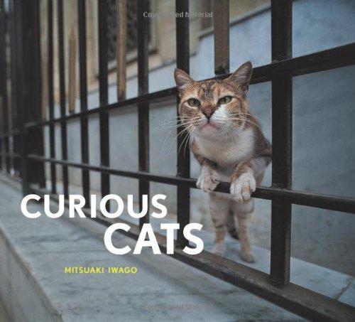 9780811870047: Curious Cats