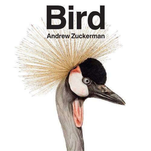 Bird: Andrew Zuckerman