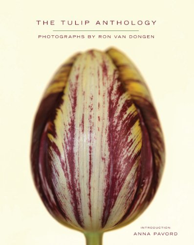 The Tulip Anthology - STUNNING HUGE FOLIO SIZED UNREAD BOOK: Anna Pavord & Ron Van Dongen