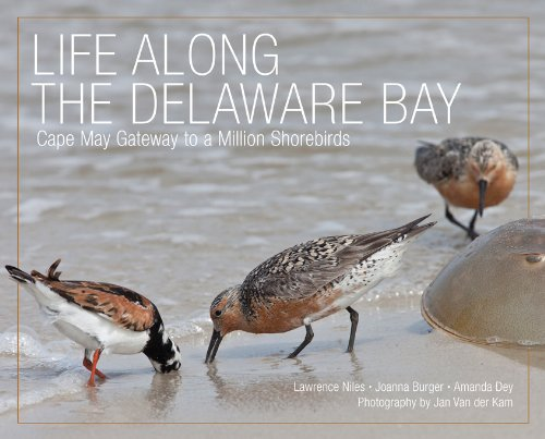 9780813552460: Life Along the Delaware Bay: Cape May, Gateway to a Million Shorebirds