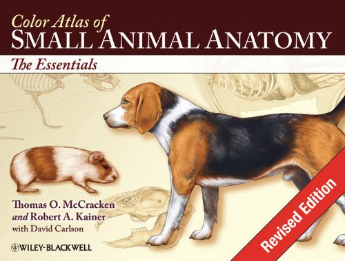 9780813816081: Color Atlas of Small Animal Anatomy: The Essentials (Essentials (Blackwell))