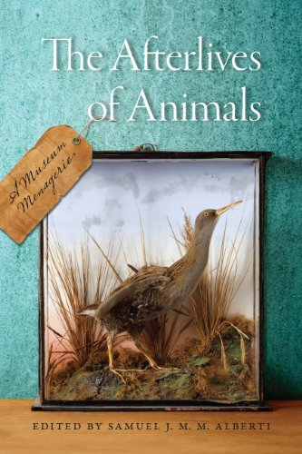 The Afterlives of Animals: A Museum Menagerie (Hardcover): Samuel J M M Albertie