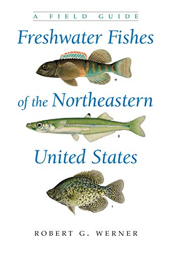 Freshwater Fishes of the Northeastern United States: A Field Guide (Hardcover): Robert G. Werner