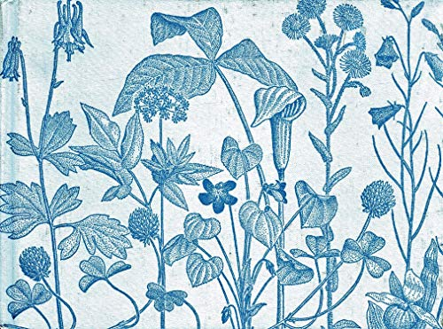 9780816606092: Common Wild Flowers of Minnesota.