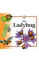 9780817243661: The Ladybug (Life Cycles (Raintree Hardcover))