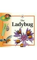 9780817262297: The Ladybug (Life Cycles) (Life Cycles (Raintree Paperback))