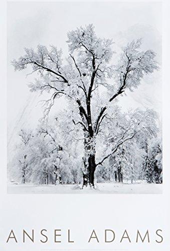 9780821224199: Oak Tree, Snowstorm, Yosemite National Park, Cailfornia 1948