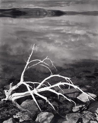 9780821261910: White Branches, Mono Lake, California, 1947