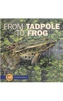 9780822506713: From Tadpole to Frog (Start to Finish)