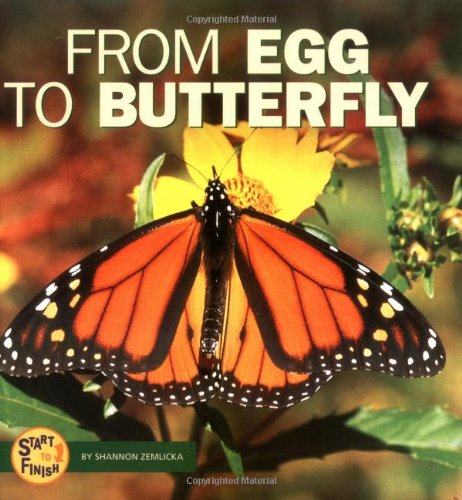 9780822507130: From Egg to Butterfly (Start to Finish)