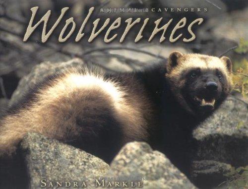 Wolverines (Animal Scavengers): Sandra Markle