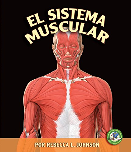 9780822562542: El Sistema Muscular = Muscular System (Libros Sobre El Cuerpo Humano Para Mandrugadores/Early Bird Body Systems)