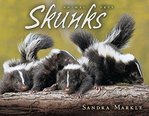 9780822564379: Skunks (Animal Prey)