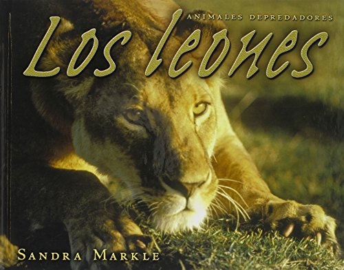 9780822564911: Los Leones = Lions (Animales Depredadores/Animal Predators)
