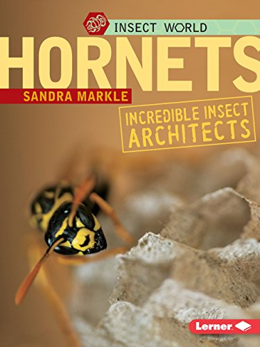 9780822589839: Hornets: Incredible Insect Architects (Insect World (Paperback))