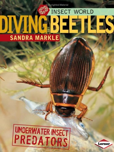 9780822589877: Diving Beetles: Underwater Insect Predators (Insect World (Paperback))