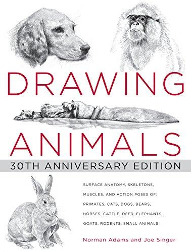 9780823013661: Drawing Animals: 30th Anniversary Edition