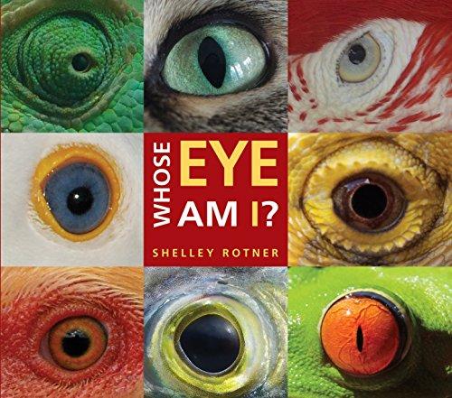 9780823435586: Whose Eye Am I?